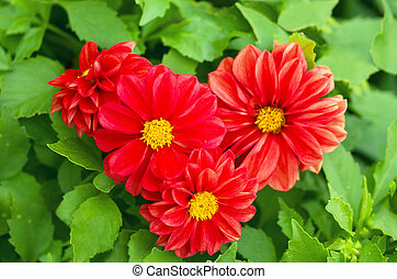 heart of the beautiful red flowers in nature