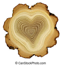 Heart of tree. Modified photo of growth rings of acacia tree - cross section. Theme of love, friendship, secret. Isolated on white background.