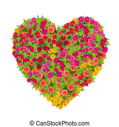 heart of zinnias flower isolated on white background