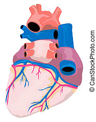 Illustration of the heart organ isolated on white background done in retro style.