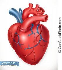 heart., organs., vektor, medicin, mänsklig, 3, inre, ikon