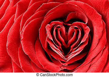 Heart shape in red rose
