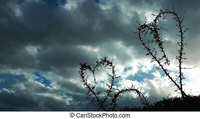 Heart shape of plants and clouds