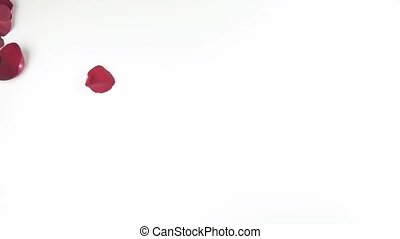Heart shape of red rose petals blown off by the wind on white background reverse slow motion