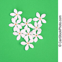 Heart shape of small white flowers on green background