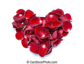 Heart Shape Red rose petal on white background