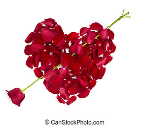 heart shape rose petals flower love valentine day