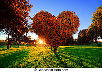 Heart shape tree with red leaves in park. Love symbol