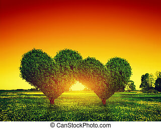 Heart shape trees couple on green grass field at sunset. Love