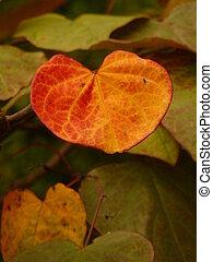 Heart Shaped Autumn Leaf