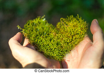 heart shaped moss in hand