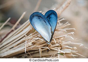 Heart shaped mussel shell on wood splinters.