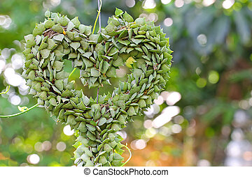 Heart-shaped succulent plant named Million Hearts (Dischidia...