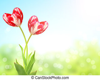 Heart shaped tulips on sunny spring background