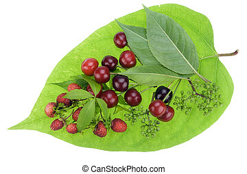Heart with blood drops concept - Leaf with red berries of a...