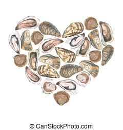 Heart with watercolor oysters on white background