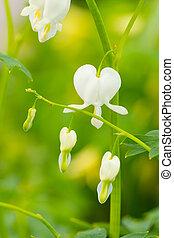 hearted-shaped, photo, fleur, fleurs, macro