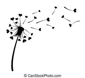 hearts., dandelion