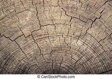 heartwood texture background. Can be used as background