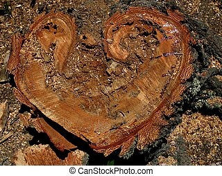 Trunk of fallen tree reveals the natural heart shape inside.