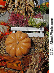 Heather, cabbage and pumpkins as autumn decoration at market place