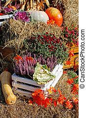 Heather, chrysanthemum, cabbage, squash, pumpkins as autumn decoration at market place