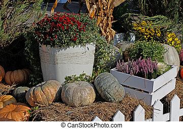 Heather, chrysanthemum, pumpkins as autumn decoration at market place