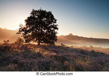 heather flowering at beautiful sunrise