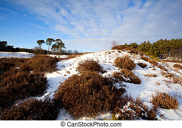 heather on hill in winter