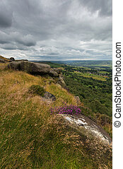 Heather on the Hill at Baslow Edge