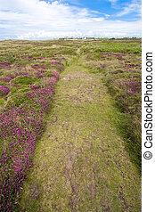 heather path
