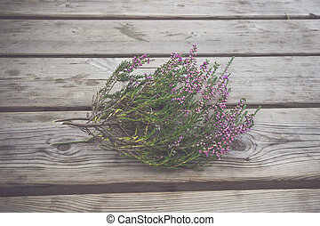 Heather with violet flowers