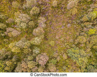 Heathland aerial view - Aerial top down view of moor nature ...