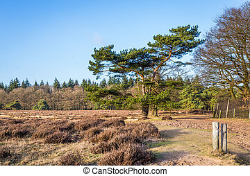 Heathland and shifting sands in national park de Hoge Veluwe in the Netherlands
