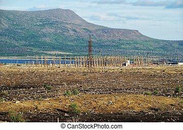 Heathland  - Summer landscape of area deforestation