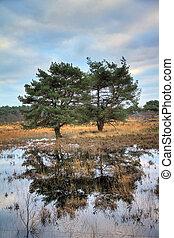 Heathland trees
