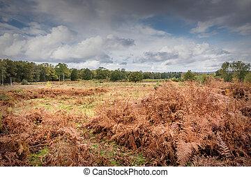 Heathland view
