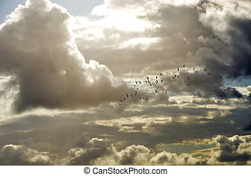 heavenly, rebanho, nuvens, pássaros