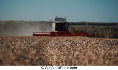 heavy combine harvests ripened wheat, front view
