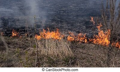 Heavy fire in the forest