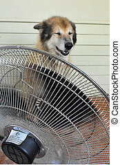 Heavy Heat Wave
