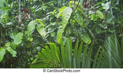 Heavy Monsoon Rains in the Jungle. hidef 1080p video - Heavy...