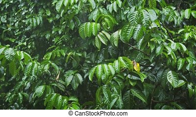 Heavy Monsoon Rains on Tropical Foliage. FullHD 1080p video...