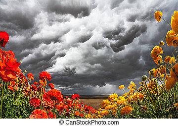 Heavy rain cloud over a flower field