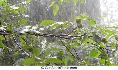 Heavy Rain day green leaves tree summer - Heavy rain during...