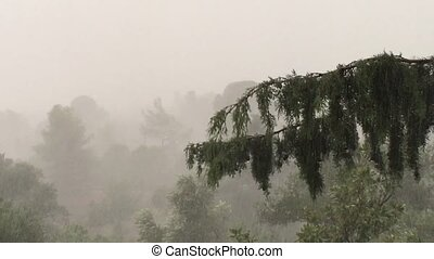rain falling over forest - Heavy rain falling over forest....