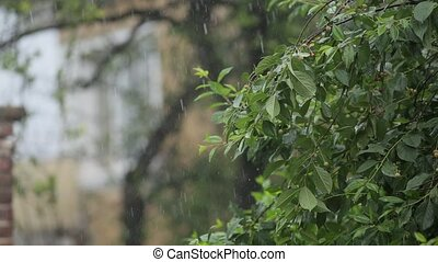 Heavy rain falls on the leaves of the trees