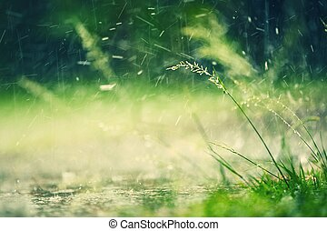 Heavy rain in park - selective focus on grass