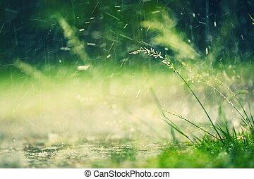Heavy rain in park - selective focus on grass