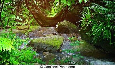 Heavy rain in rainforest